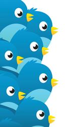 tweet-single-bird_01.png